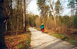 Holland forest bike trail