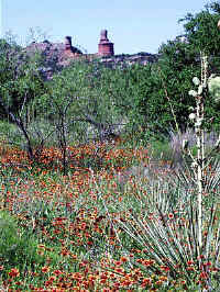 Palo Duro Indian Blankets and yucca