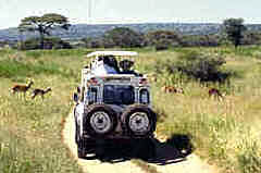 Wildlife viewing by Land Rover